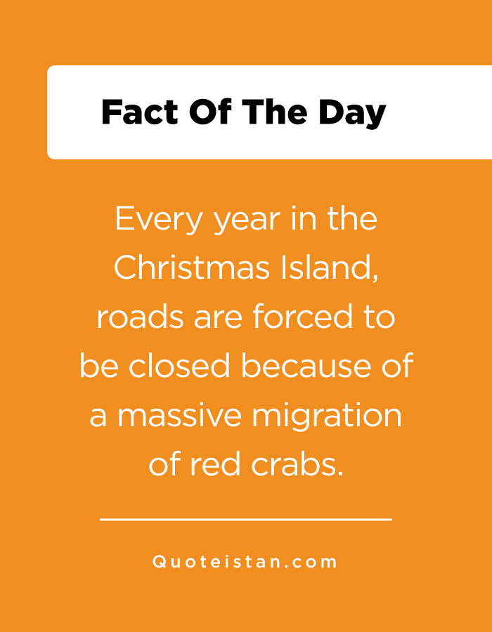 Every year in the Christmas Island, roads are forced to be closed because of a massive migration of red crabs.