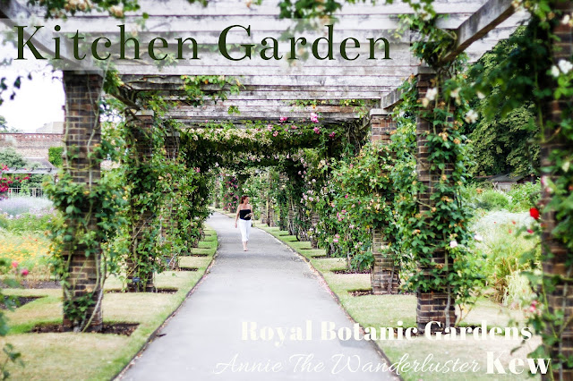 KEW Gardens 邱園 kitchen garden