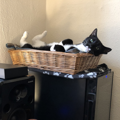 black and white cat lying in basket with paws in the air