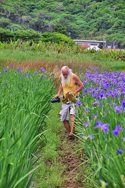 Walking the iris field paddy barefoot