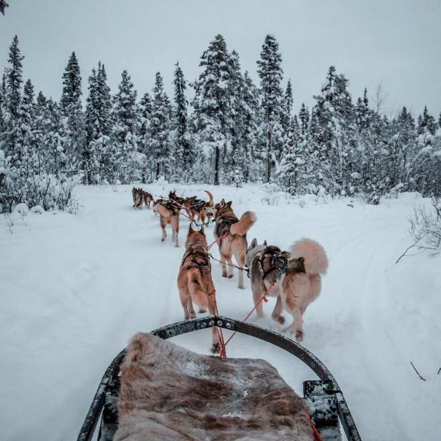 viaggio-di-gruppo-in-lapponia-con-poracci-in-viaggio-husky