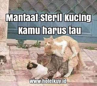 manfaat steril kucing