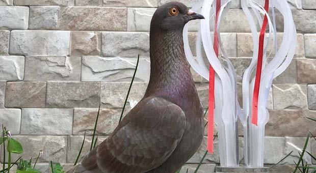 Burung Merpati Milik Warga Bandung Laku Seharga Rp1 Miliar