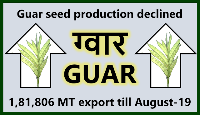 Guar Seed supply will remain tight due to lower production, Guar, guar gum, guar price, guar gum price, guar demand, guar gum demand, guar seed production, guar seed stock, guar seed consumption, guar gum cultivation, guar gum cultivation in india, Guar gum farming, guar gum export from india , guar seed export, guar gum export, guar gum farming, guar gum cultivation consultancy, today guar price, today guar gum price, ग्वार, ग्वार गम, ग्वार मांग, ग्वार गम निर्यात 2018-2019, ग्वार गम निर्यात -2019, ग्वार उत्पादन, ग्वार कीमत, ग्वार गम मांग, Guar Gum, Guar seed, guar , guar gum, guar gum export from india, guar gum export to USA, guar demand USA, guar future price, guar future demand, guar production 2019, guar gum demand 2019, guar, guar gum, cluster beans, guar gum powder, guar gum price, guar gum uses, ncdex guar, guar price, guar gum price today, cyamopsis tetragonoloba, ncdex guar gum price, guar beans, guar rate today