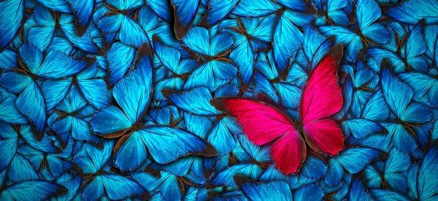 kelebek-etkisi-adını-nereden-almıştır
