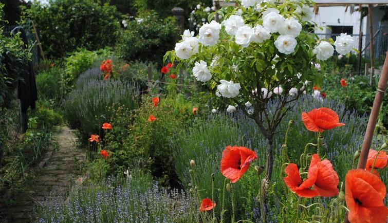 Bauerngarten mit Mohnblumen
