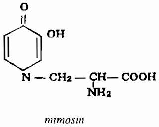 Thành phần hóa học CÂY XẤU HỔ - Mimosa pudica - Nguyên liệu làm Thuốc Ngủ, An Thần, Trấn Kinh