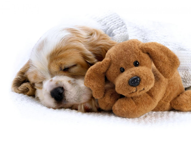 Why Do Puppies Sleep So Much?: A Guide to Help Your Puppy Get Enough Rest