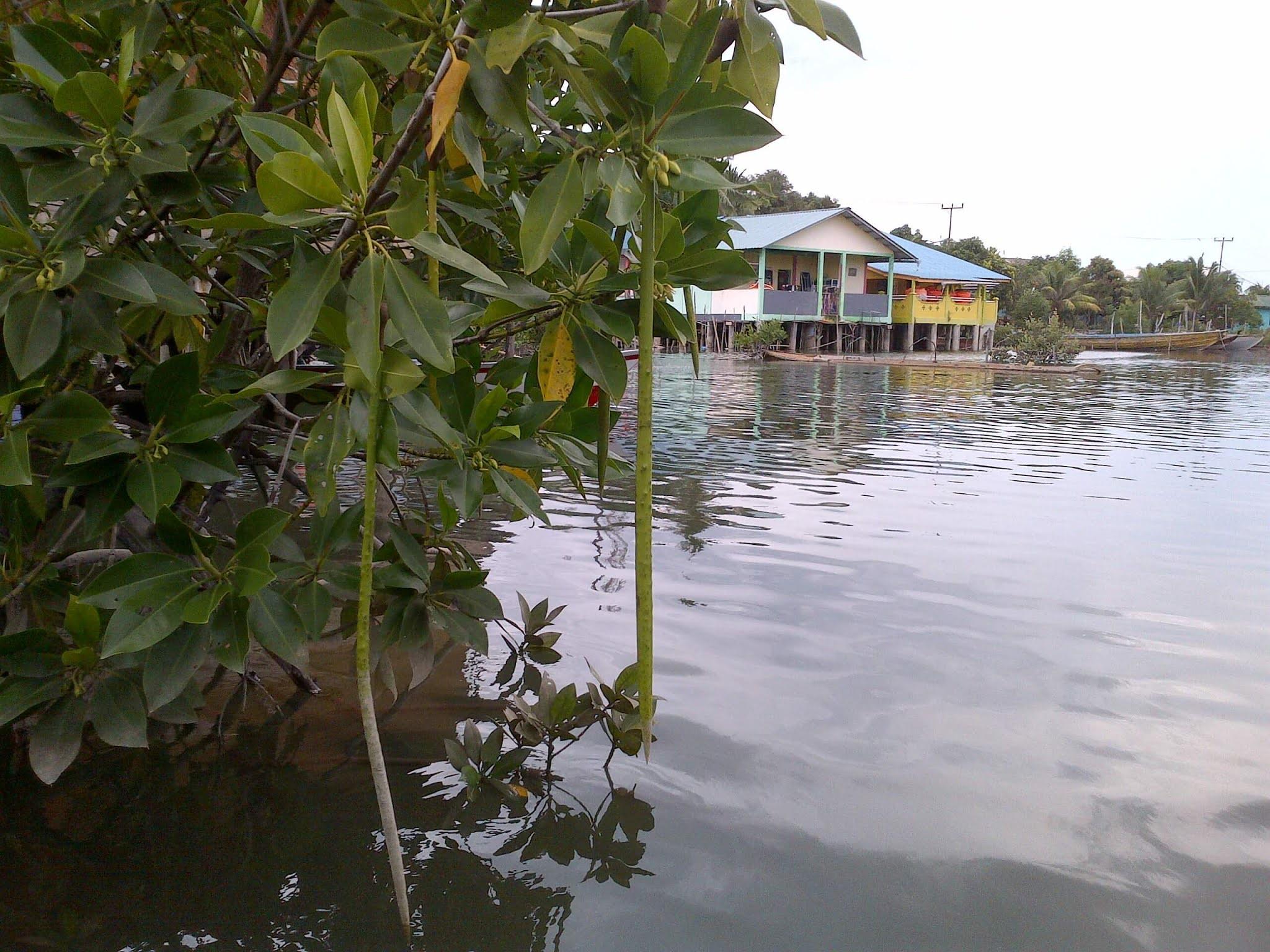 Pantai Indah Pulau Lengkana 2