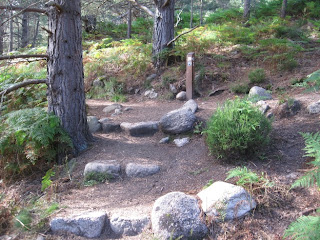 A junction in the path on the Burn o' Vat trail