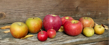 A medley of fall apples, red, yellow, and brown, of all sizes.