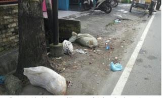 Di temukan bangkai babi di jalan Gedung Arca