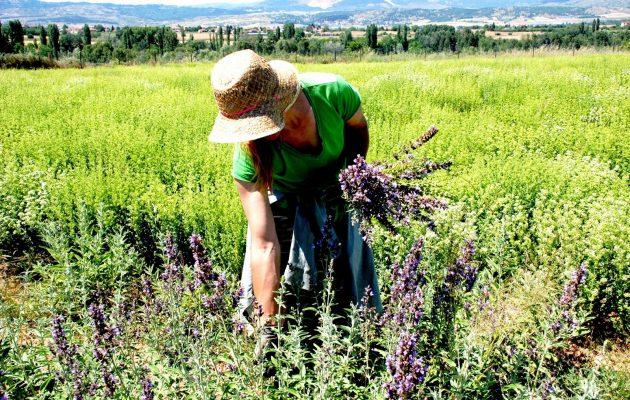 Σε ποιους αγρότες θα χαρίσει το Δημόσιο από 1000 στρέμματα γης
