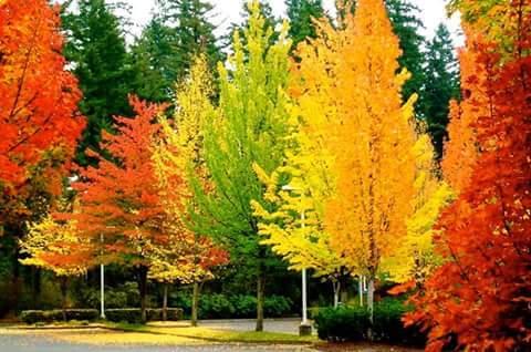Warna warni pohon aspen di musim gugur