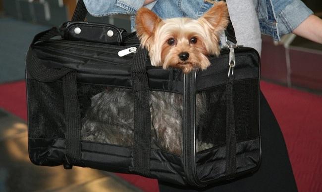 Sherpa Sport Duffle Dog Carrier