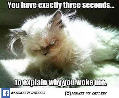 Why you woke me