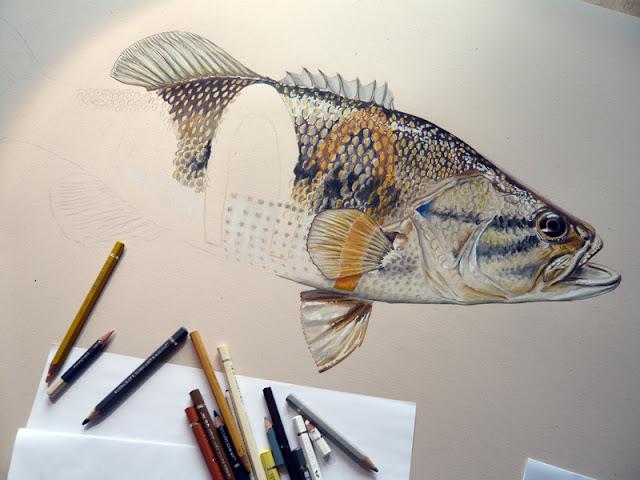 Dessin partiel d'un poisson tatoué avec le logo Mac Donald