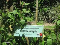 dye garden label