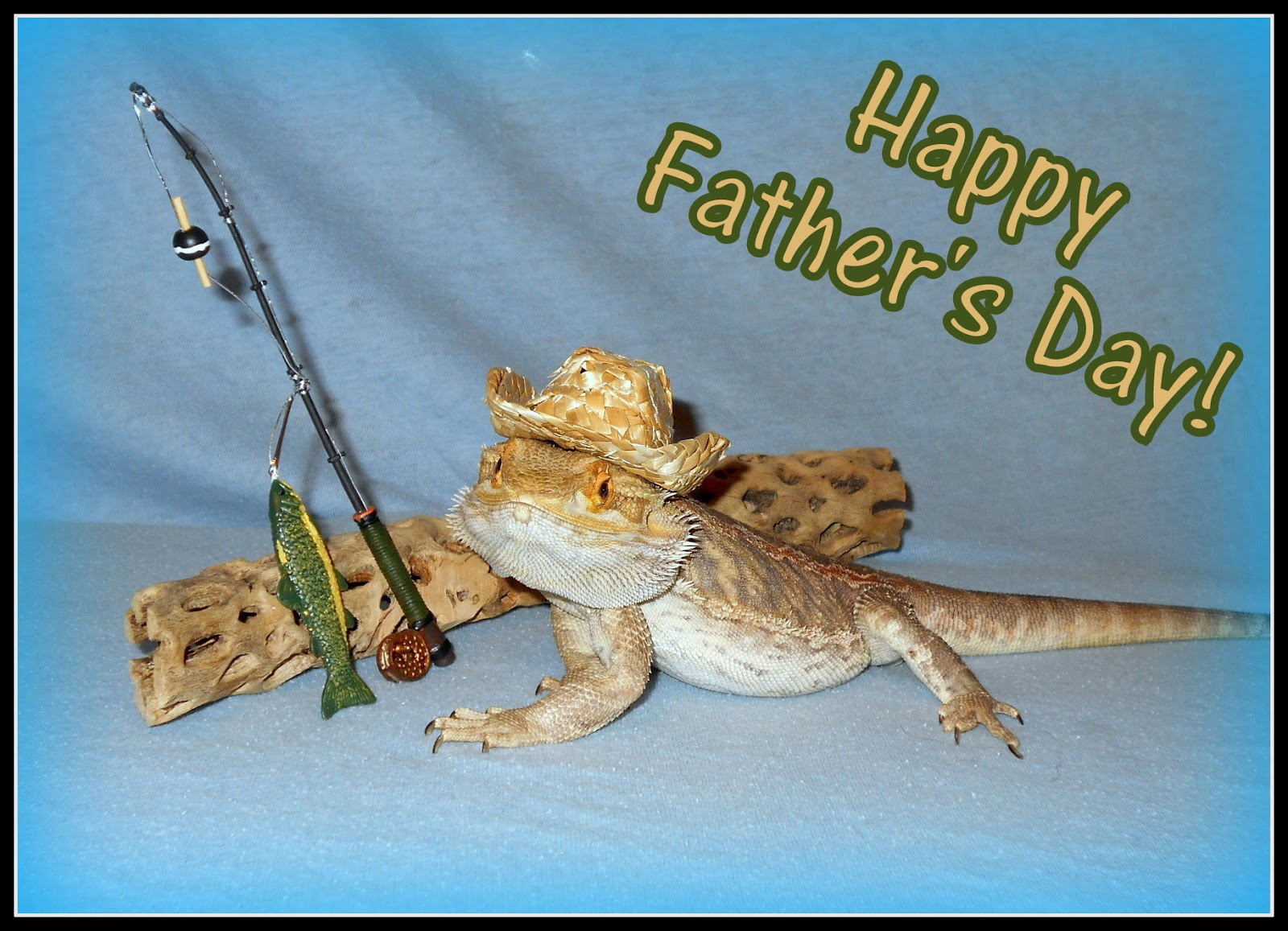 Kelleys dog blog happy fathers day he has he lovingly guided two boys into manhood he has also loved numerous dogs cats birds ferrets rodents and reptiles over the past sciox Gallery