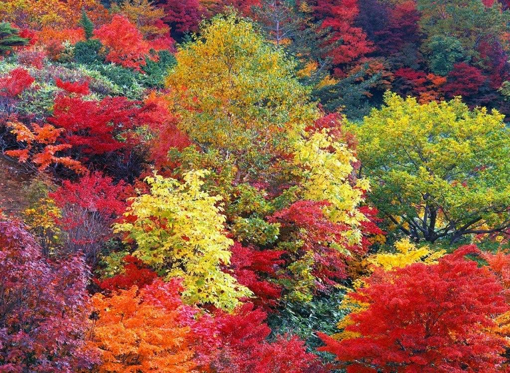 Sensibilizaci n ambiental la vida en im genes colores de for Arboles de hoja perenne para madrid