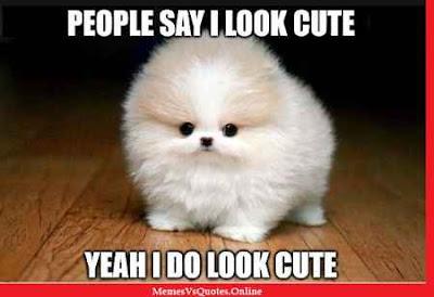 Cute Memes
