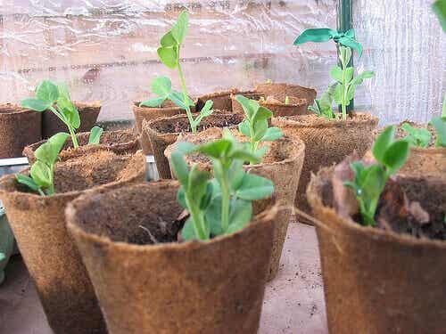 Cách tự làm một vườn rau sạch hữu cơ ở thành phố