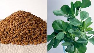Τριγωνέλλα: Το βότανο που «χτυπάει» διαβήτη, χοληστερόλη και αυξάνει… το στήθος