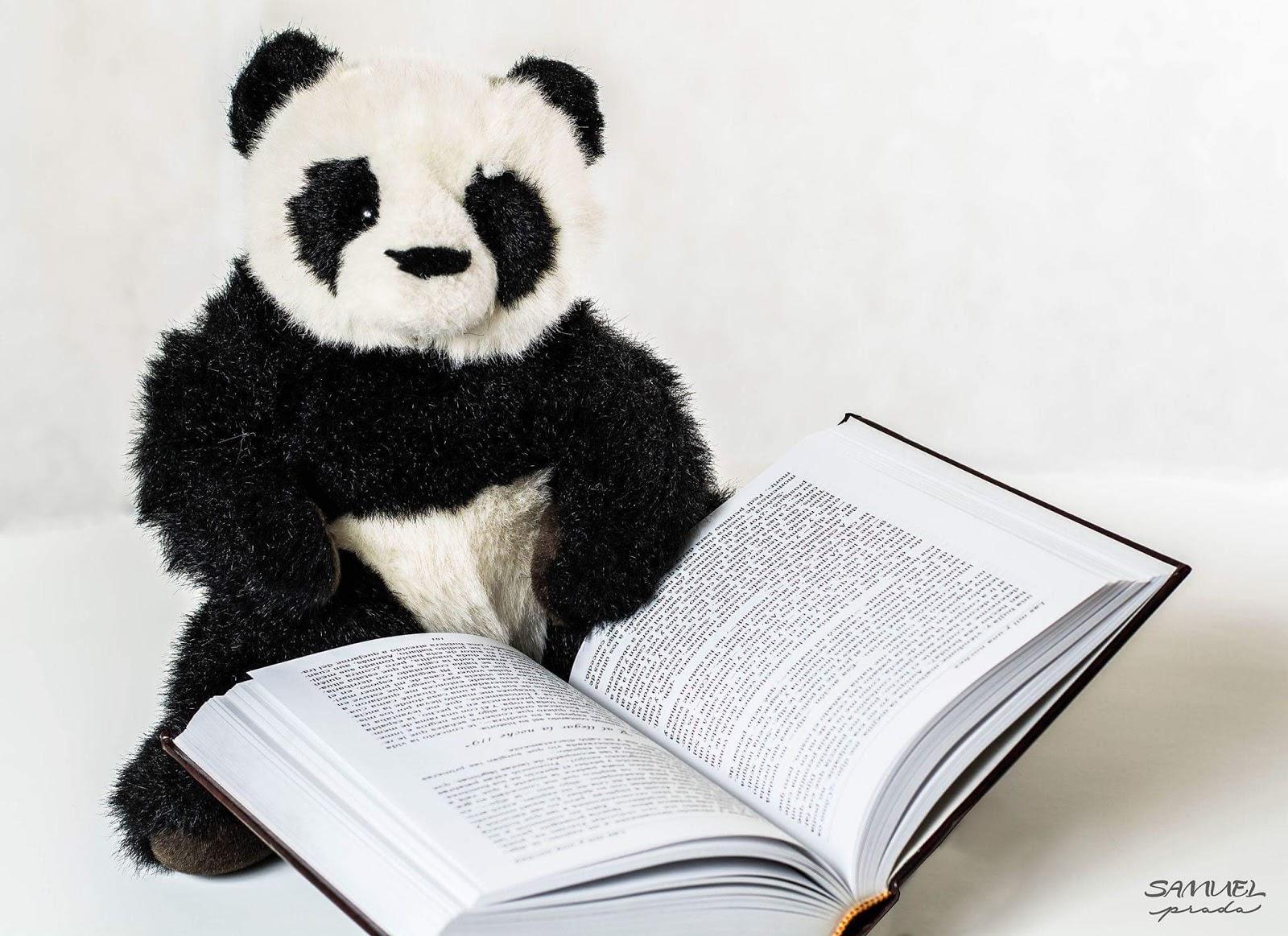¡Porque todos amamos a los pandas!