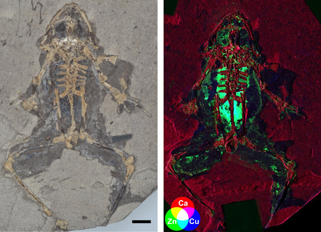 Scientists discover new way to reconstruct what extinct animals looked like