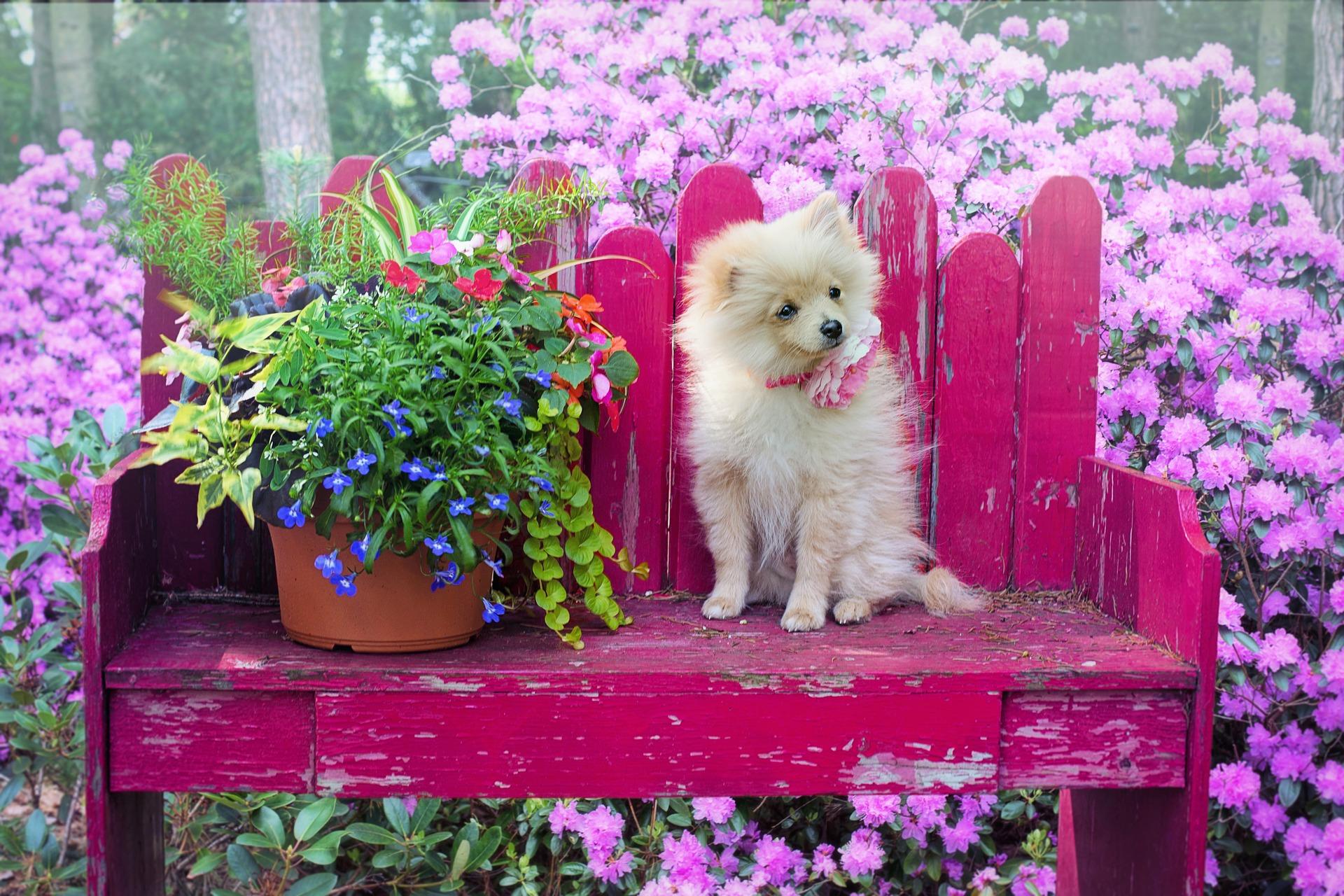 Cachorrinha sentada no banco