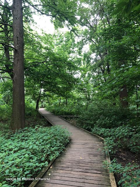 Boardwalk through the wetlands of Bartram's Garden towards the Schuylkill River.