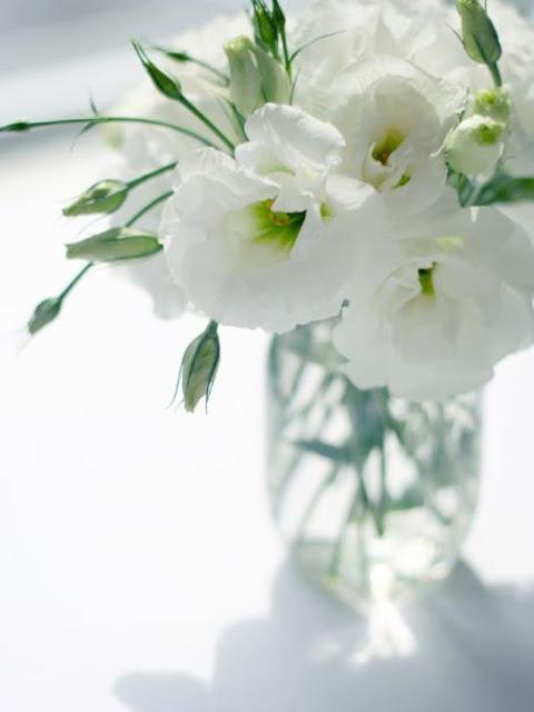 hoa cat tuong trang