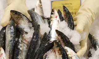 http://www.efeagro.com/noticia/sardina-pesca/