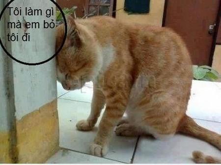 Mèo hài hước