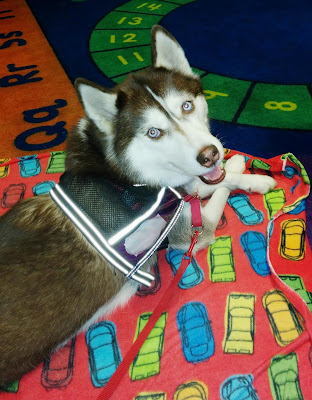 How to run a great Therapy Dog program.  Animal therapy programs, #therapydogs Pet therapy programs