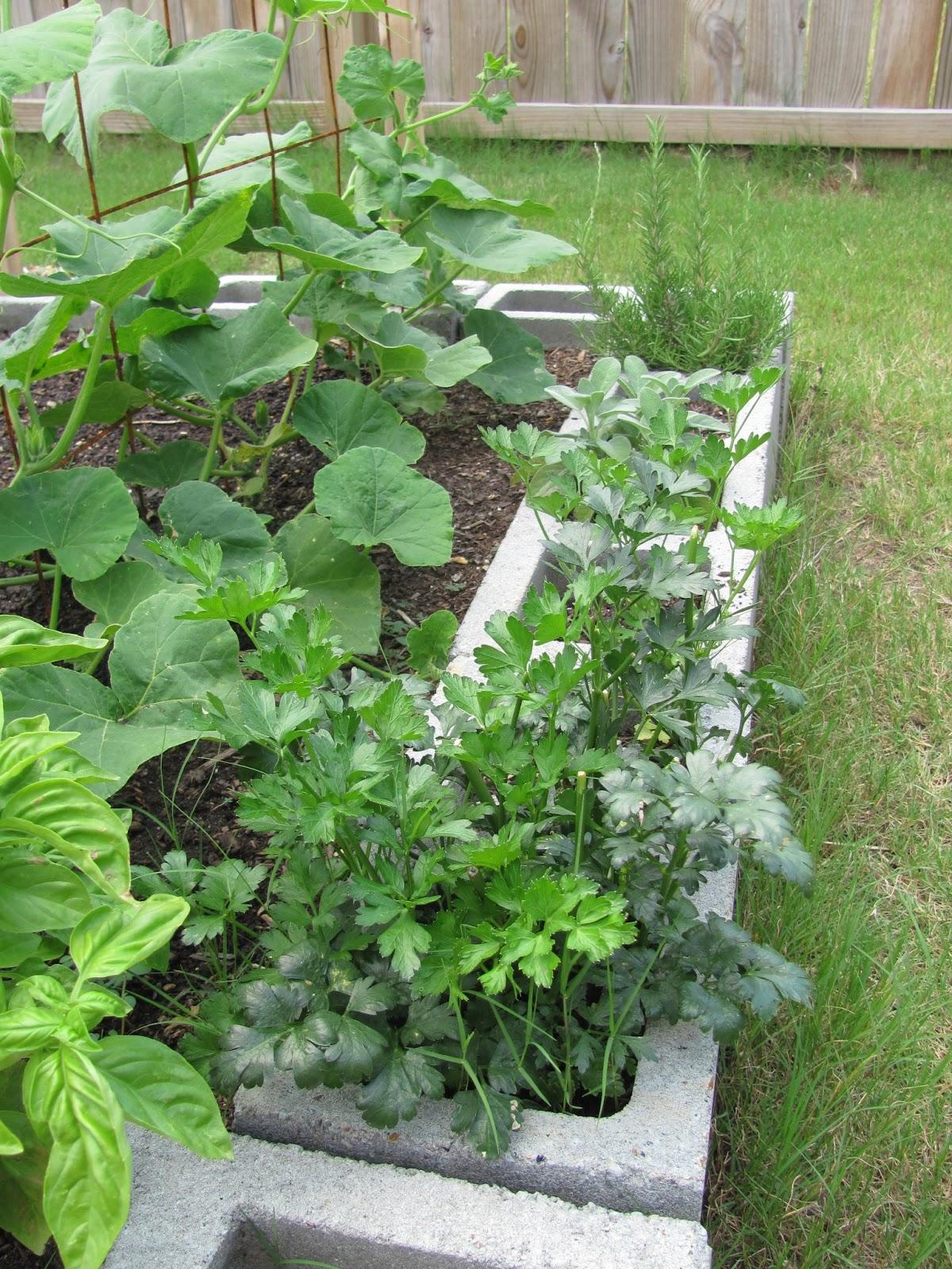 Angelyn's Rambelyns: Cinder Block Garden Update: Summer 2013