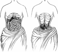 Waist training facts
