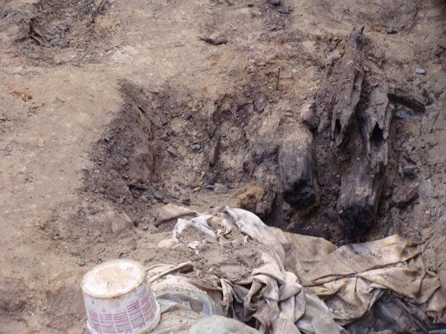 Budowa rezerwatu archeologicznego w Poznaniu, eksponującego przekrój wału piastowskiego grodu na Ostrowie Tumskim