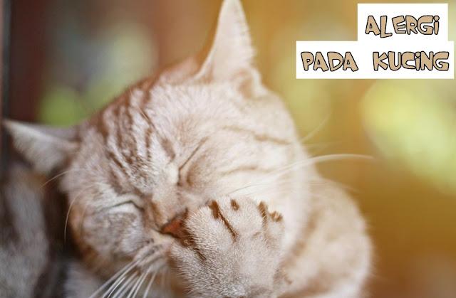 Kucing sedang Alergi