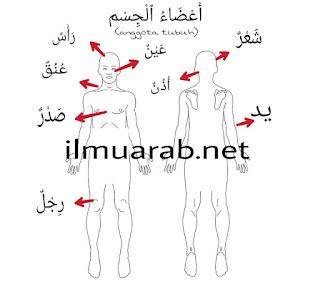 Kosakata Bahasa Arab Anggota Tubuh Beserta Artinya