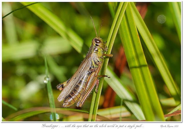 Grasshopper: ... with the eyes that see the whole world in just a single peek...