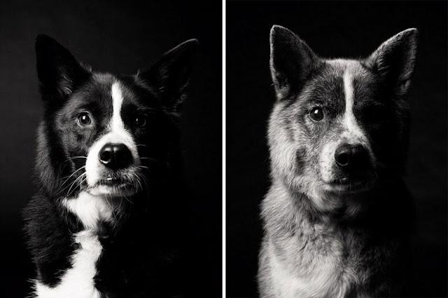 perra maddy 5 años antes y 10 años después