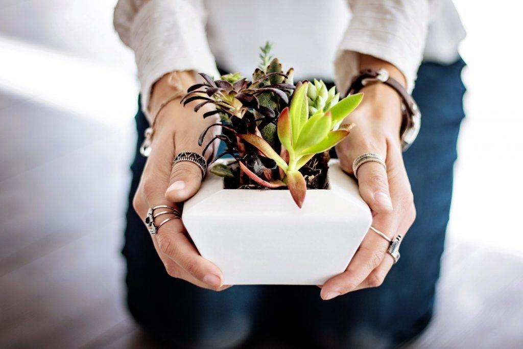 Trồng cây xanh sẽ giúp tâm trạng bạn vui vẻ trở lại