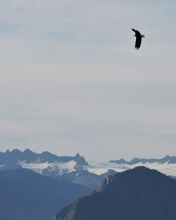 bald eagle- glacier