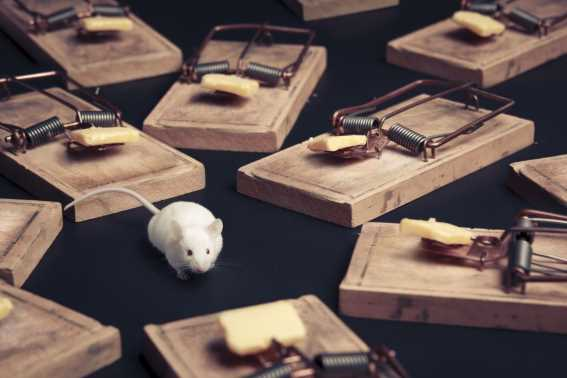 Jenis Perangkap Tikus Sederhana