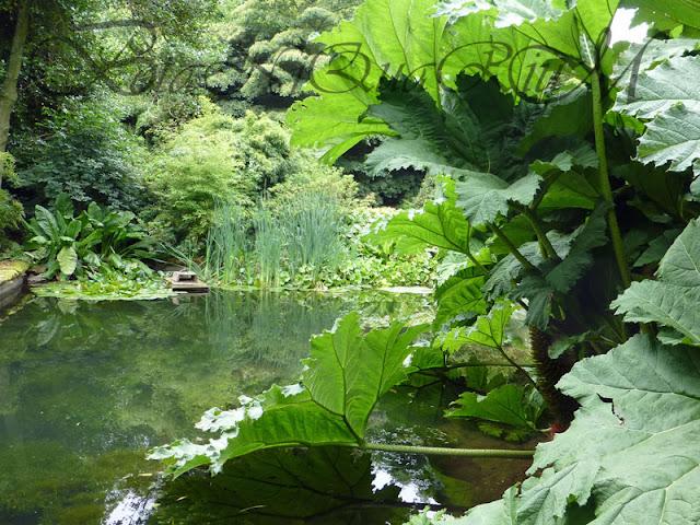 Botaniquarium - Gunnera manicata habitat