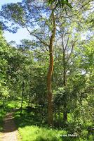 Dark orange tree trunk - Hawaii Volcanoes National Park, HI