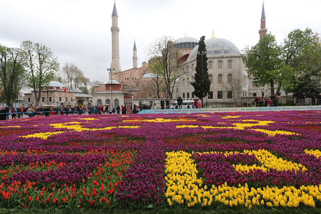 Colourful Tulips in front of Hagia Sophia during Spring at Sultanahmet in Istanbul, Turkey