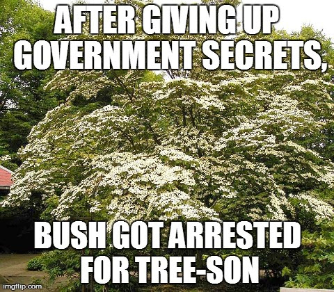 Did you hear about bush? He was arrested for treeson.