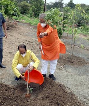 मुख्यमंत्री चौहान आकाश-नीम का पौधा लगते हुए